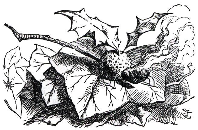 snap dragon fly is a raisin on fire